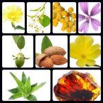 sensitive cream ingredients pictures